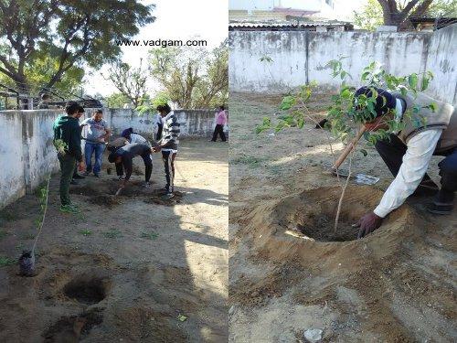 Tree-Plantation-8.2.15